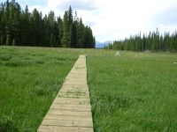 Boardwalk Across a Meadow