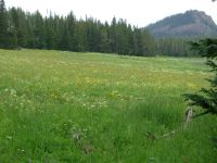 Meadow on Highway 40