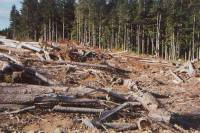 Clearcut Forest